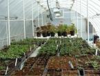 Rastlinjaki